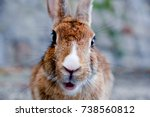 Stock photo cute wild bunny rabbits in japan s rabbit island okunoshima 738560812