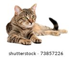 Stock photo tabby cat lying on white background 73857226