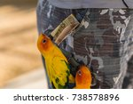 funny birds taking money from a ... | Shutterstock . vector #738578896