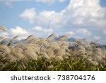 silver grass flower blowing in... | Shutterstock . vector #738704176