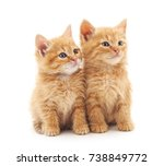 Stock photo two little kittens isolated on a white background 738849772