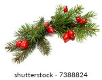 red rose hips and green spruce... | Shutterstock . vector #7388824