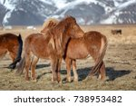 two young icelandic horse foals ... | Shutterstock . vector #738953482