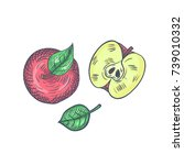 hand drawn apples sketch top... | Shutterstock .eps vector #739010332