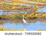 stork is walking on the water...   Shutterstock . vector #739020082
