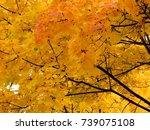 golden autumn background of... | Shutterstock . vector #739075108