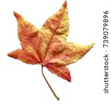 Small photo of Colored autumn leave