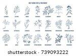 best herbs for flu treatment.... | Shutterstock .eps vector #739093222