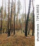 autumn landscape   Shutterstock . vector #739138552