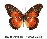 Stock photo butterfly isolated on a white background 739152145