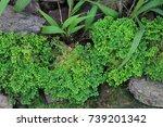 river side moss | Shutterstock . vector #739201342