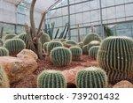 cactus in thailand | Shutterstock . vector #739201432