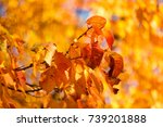 colorful autumn leaves of a... | Shutterstock . vector #739201888