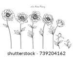 peony julia rose flowers... | Shutterstock .eps vector #739204162