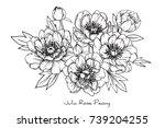 peony julia rose flowers... | Shutterstock .eps vector #739204255