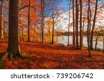red and colorful autumn colors... | Shutterstock . vector #739206742