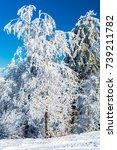 winter wonderland | Shutterstock . vector #739211782