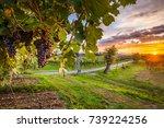 grape harvest | Shutterstock . vector #739224256