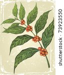 old fashioned hand drawn coffee ... | Shutterstock .eps vector #73923550