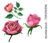 wildflower rose flower in a... | Shutterstock . vector #739250596