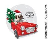 christmas card. pug dog in a...