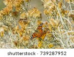 Small photo of bokeh,setting monarch butterfly resting on autumn sage plant