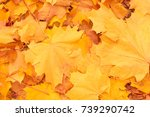 Autumn Background Of Yellow...