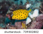juvenile yellow boxfish... | Shutterstock . vector #739302802