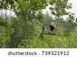 a cute panda sits on a branch... | Shutterstock . vector #739321912