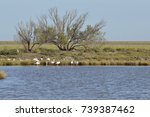 birds in the salt marshes and... | Shutterstock . vector #739387462