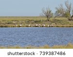 birds in the salt marshes and... | Shutterstock . vector #739387486