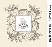 background with maca peruvian.... | Shutterstock .eps vector #739485262