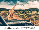 wildlife african safari ... | Shutterstock . vector #739498666