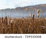 Autumn As Seen In A Marsh...