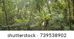 many terrestrial bromeliads... | Shutterstock . vector #739538902