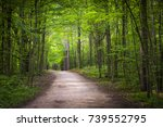 Hiking Trail In Green Summer...