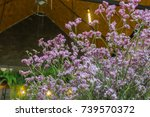 Small photo of Purple flowers are adorned in restaurants or cafes.