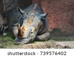 Rhinoceros Sleeping Zoo Rhinoceros Have - Fine Art prints