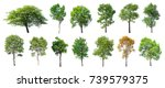 Stock photo collection of isolated trees on white background a beautiful trees from thailand suitable for 739579375
