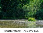 summer landscape. swamp  marsh  ... | Shutterstock . vector #739599166