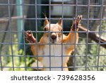Small photo of Altaic rarer-white squirrel in a zoo cage on a sunny summer day.