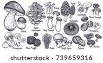 mushrooms bolete  morel