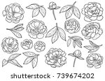 peony flowers and leaves set.... | Shutterstock .eps vector #739674202