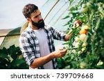 male farmer picking fresh... | Shutterstock . vector #739709668