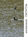duck | Shutterstock . vector #739747756
