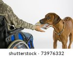 Dog Ist Bringing Newspaper