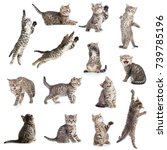 Stock photo cats or kittens isolated collection 739785196