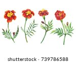 set red flowers tagetes patula  ... | Shutterstock . vector #739786588