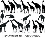 illustration with giraffes... | Shutterstock .eps vector #739799002