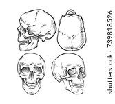 skulls. from different sides.... | Shutterstock .eps vector #739818526